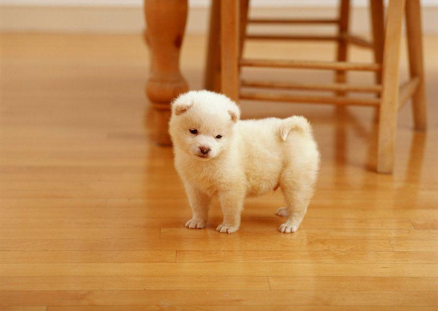 Little Dog *-*