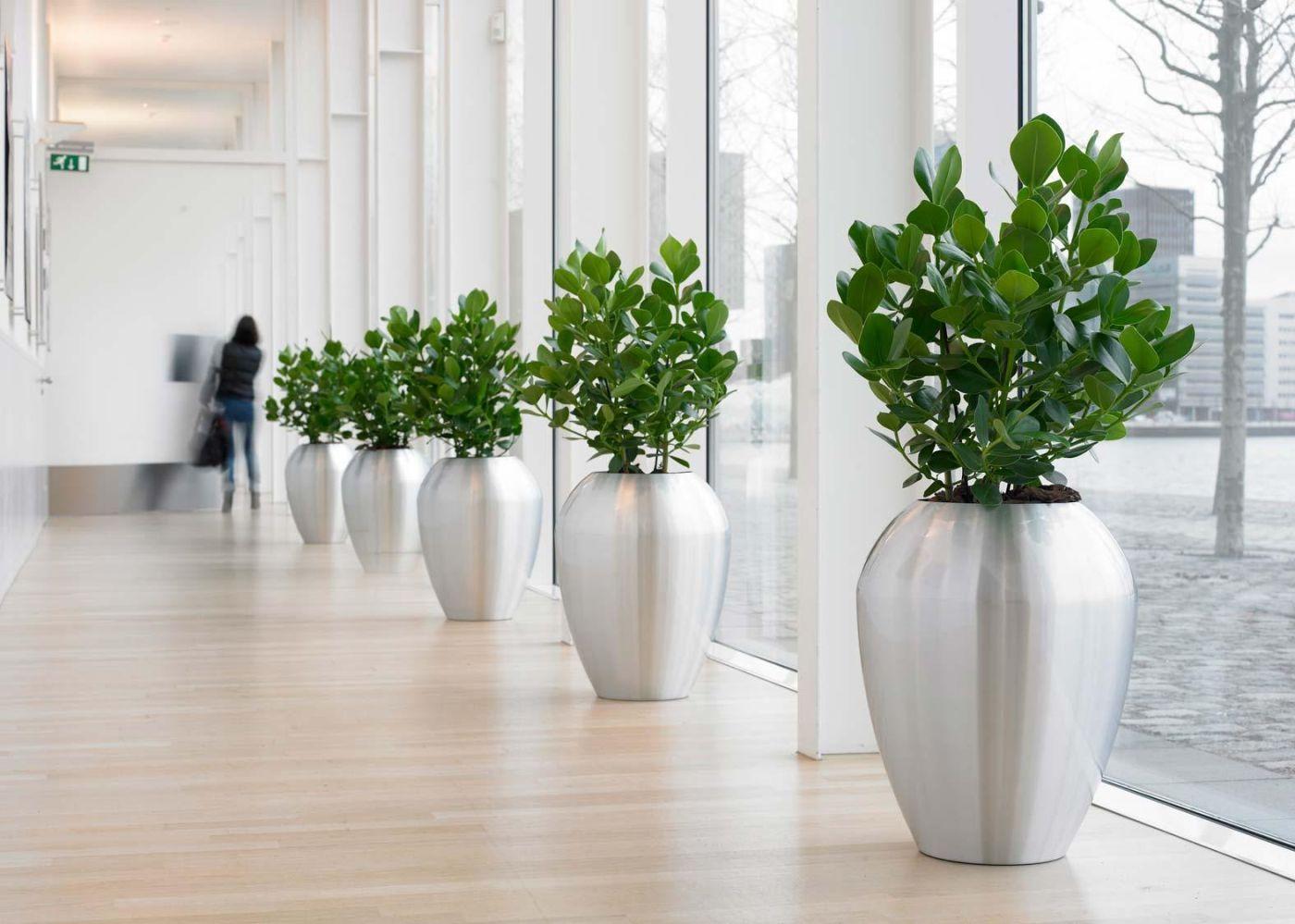 Купить напольные цветы в офисные
