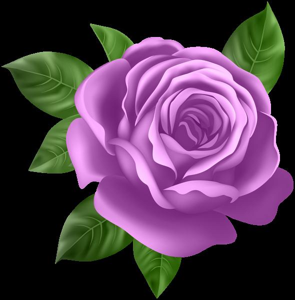 Purple Rose Transparent Png Clip Art Flower Clipart Rose Flower Wallpaper Purple Roses