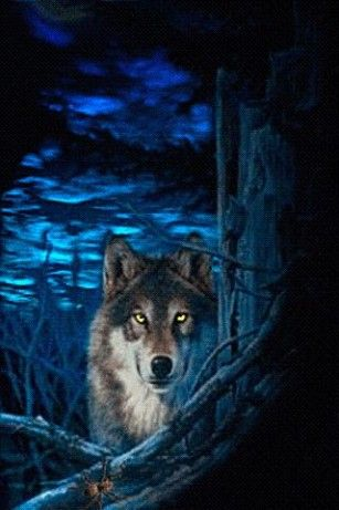 Free Moving Wolf Wallpaper View Bigger Blue Night Wolf Live