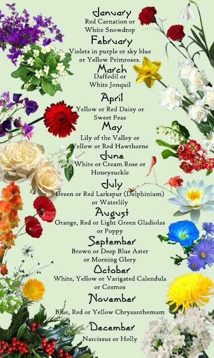 451658a89 Birth month flower | Herbs, Flowers, oils and Trees | Birth month ...