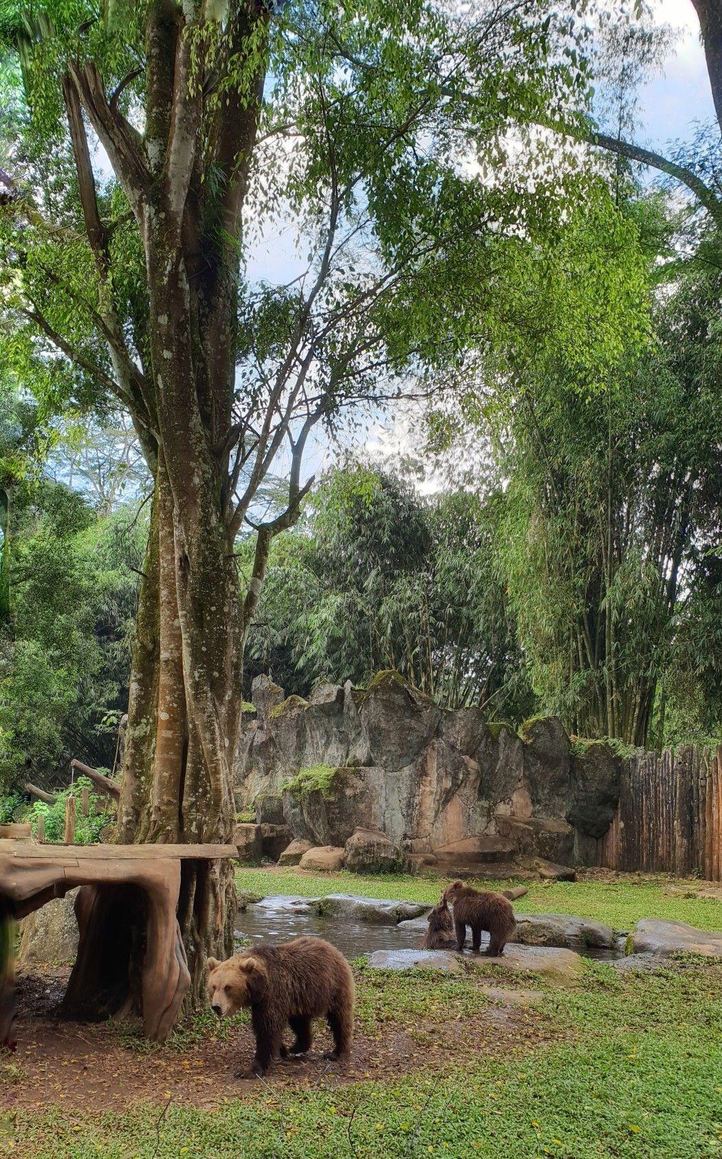 Kebun Binatang Safari Bogor