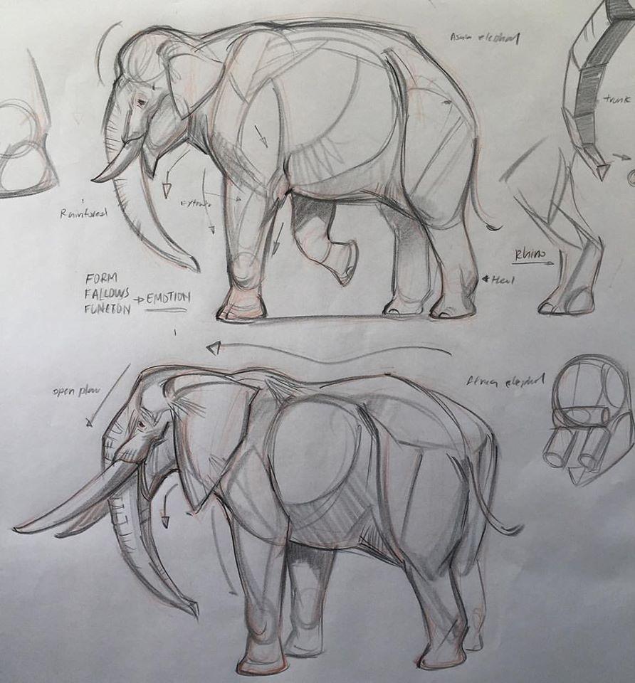 Elefante | draw animals | Pinterest | Elefantes, Anatomía animal y ...