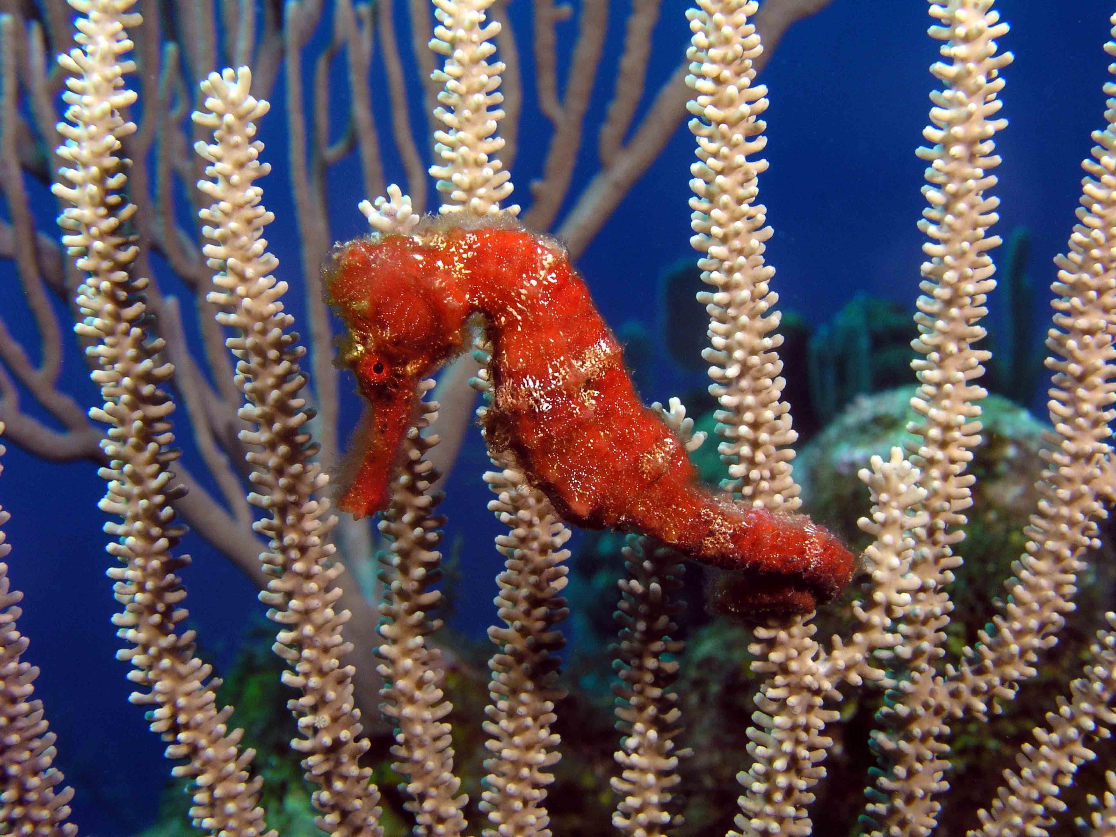 c5400d4b971608e03e552fea7053962e Luxe De Crevette Aquarium Des Idées