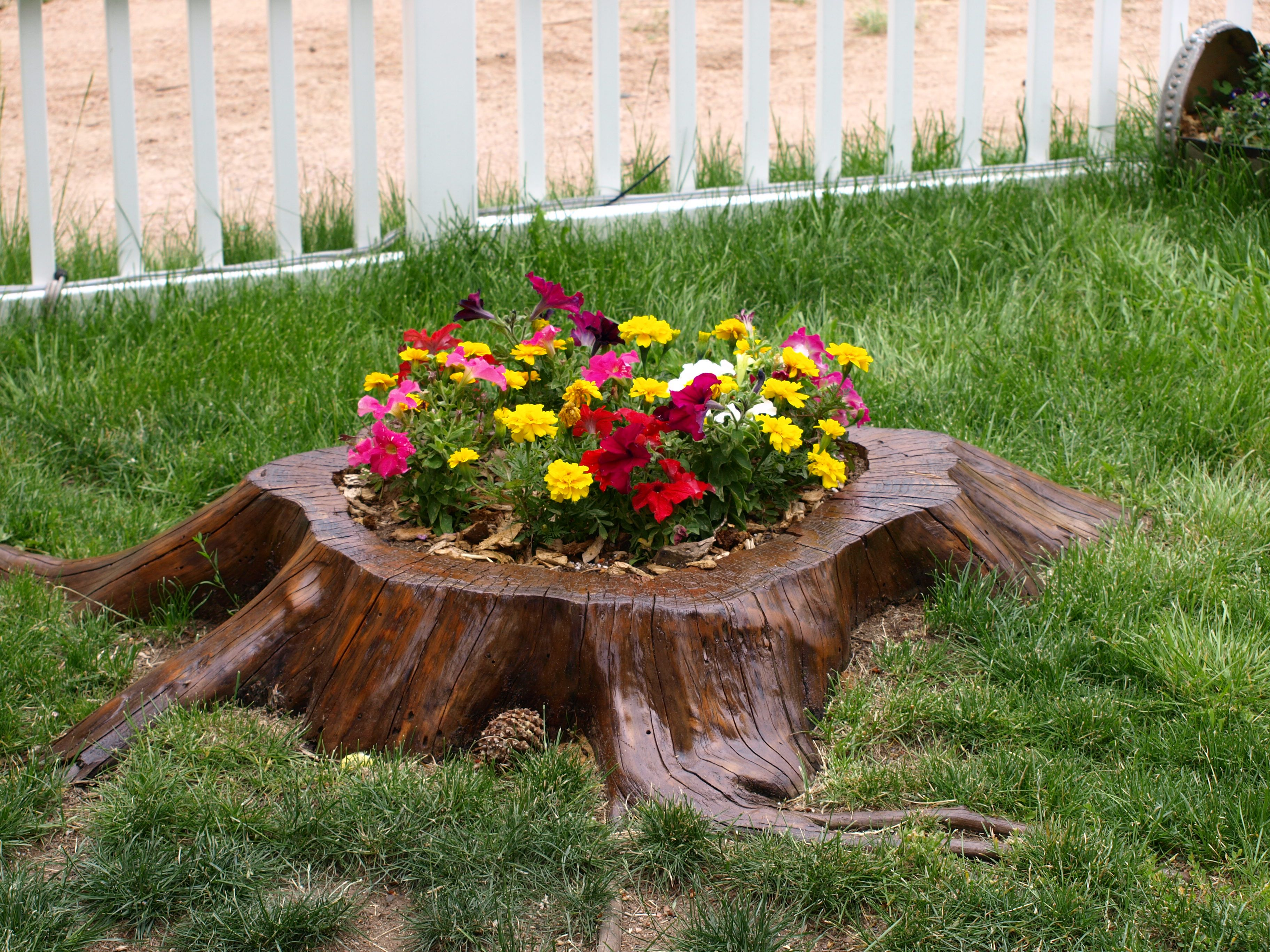 The tree stump in my yard that I turned into a planter