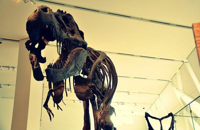 ROM, the Royal Ontario Museum, Toronto Age of the Dinosaurs