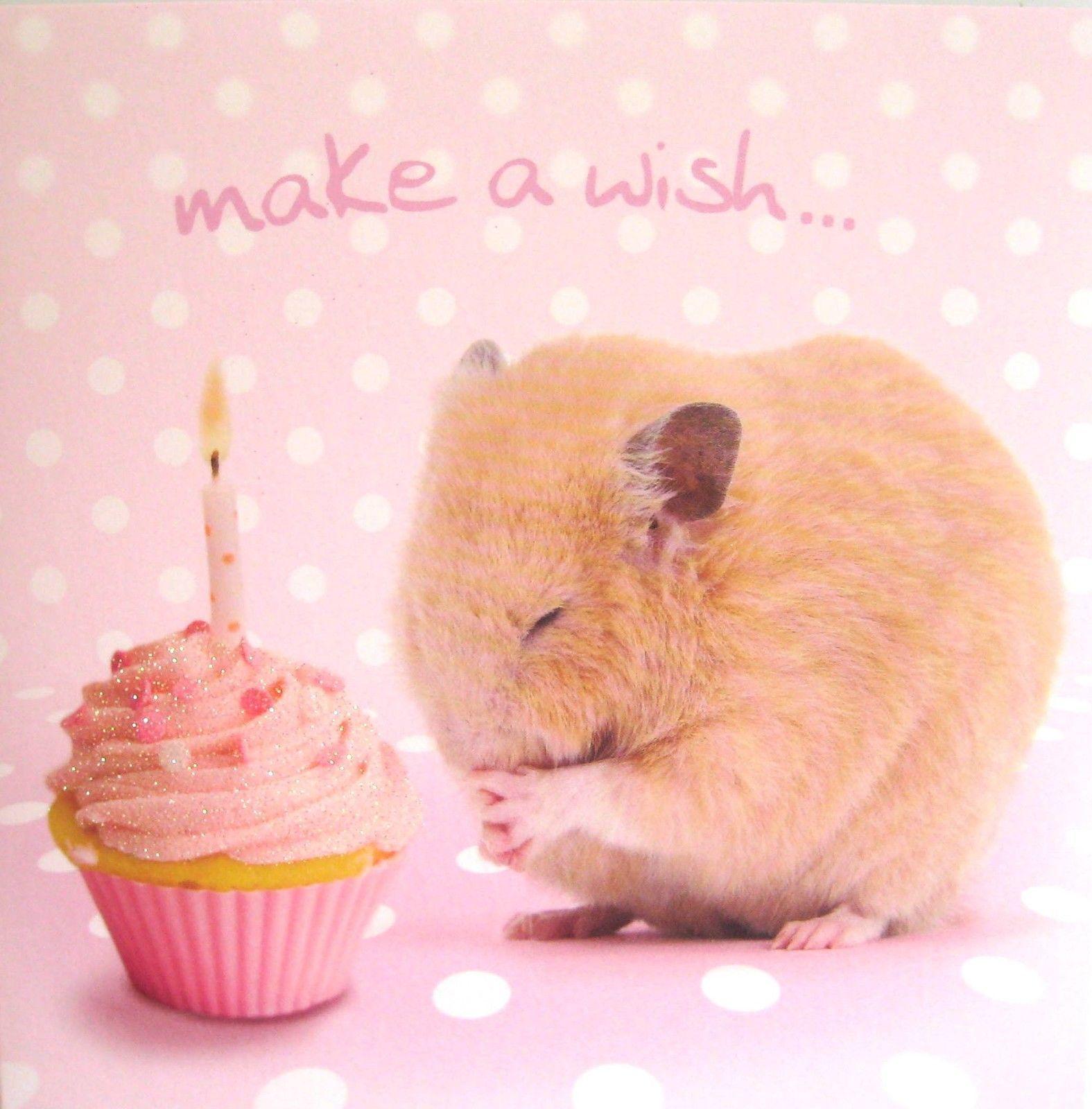 Funny Hamster Animal Birthday Card Make A Wish Birthday Cake Ebay Echt Jetzt