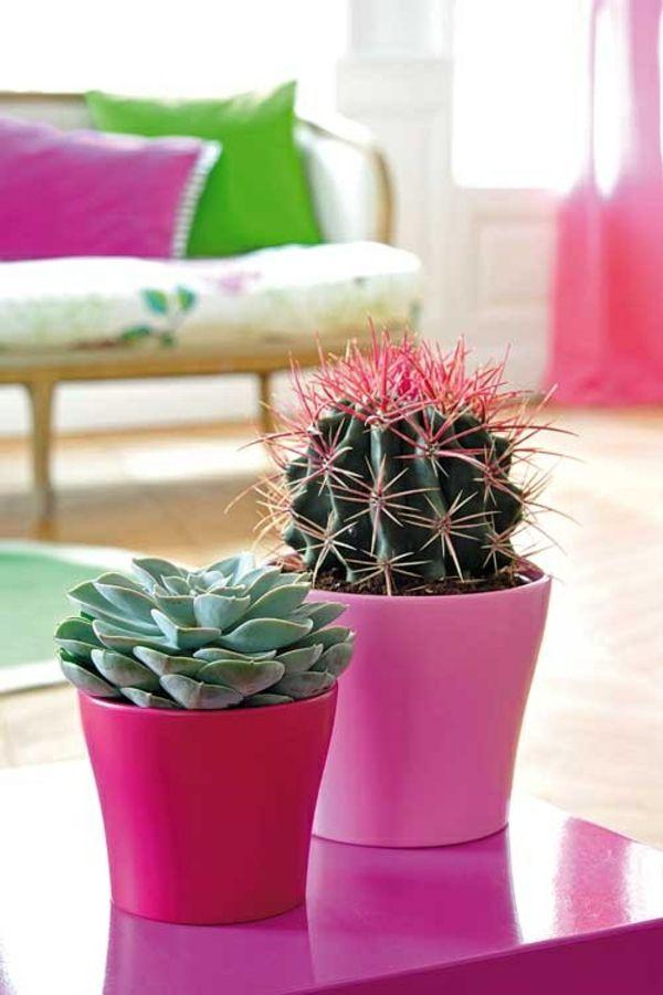 Cactus And Succulent | Indoor Plants | Pinterest | Sukkulenten ... Garten Dezember Wo Was Verbessern