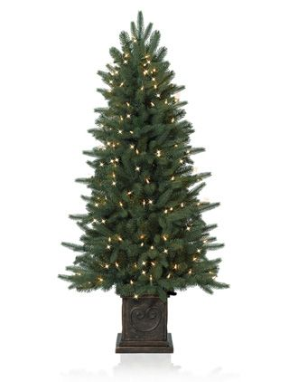 Windsor Potted Spruce by Vermont Signature Home Pinterest