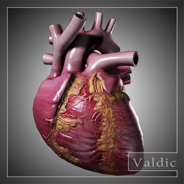 3d Max Heart Human Man Human Heart Parts Of The Heart Anatomical Heart