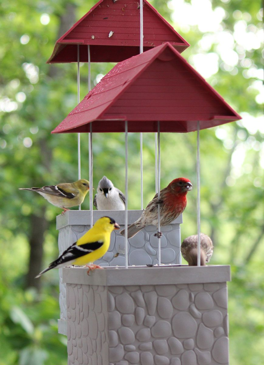 Attracting Birds to Your Garden | Birds, How to attract ...