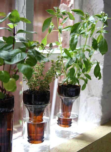 Jardin Aromatique Intérieur herbes aromatiques : 18 façons astucieuses de les faire pousser en