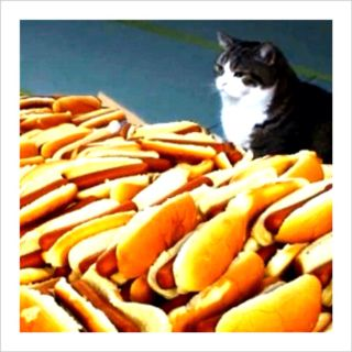 Cat On Hot Dog Mountain Hot Dogs Cats Animal Memes