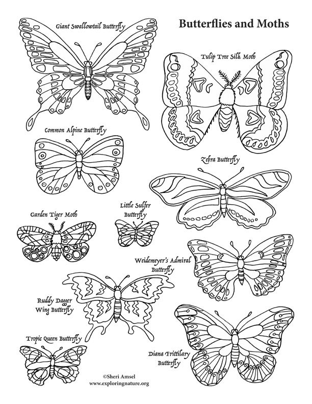 Coloring Pages Of Butterflies And Moths Coloring Pages Of