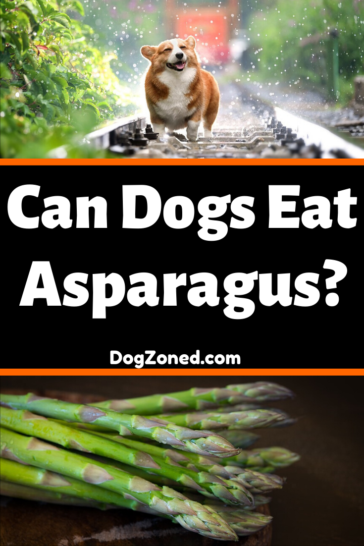 What Vegetables Can Dogs Eat Ultimate Guide Can dogs