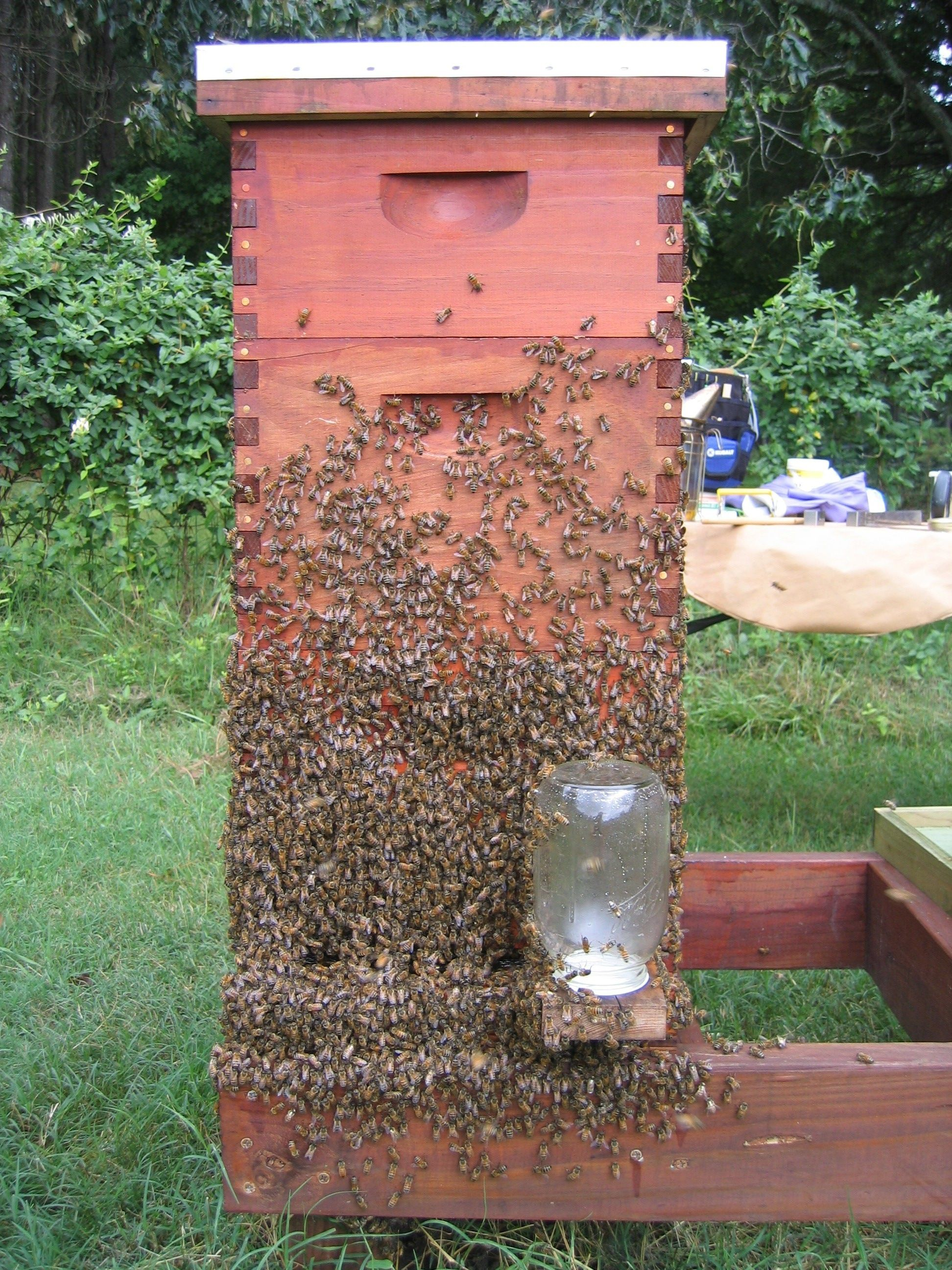 Bienenhaltung Im Garten The Bee 39s Reverie Bees Quotbearding Quot To Cool Off On A Hot