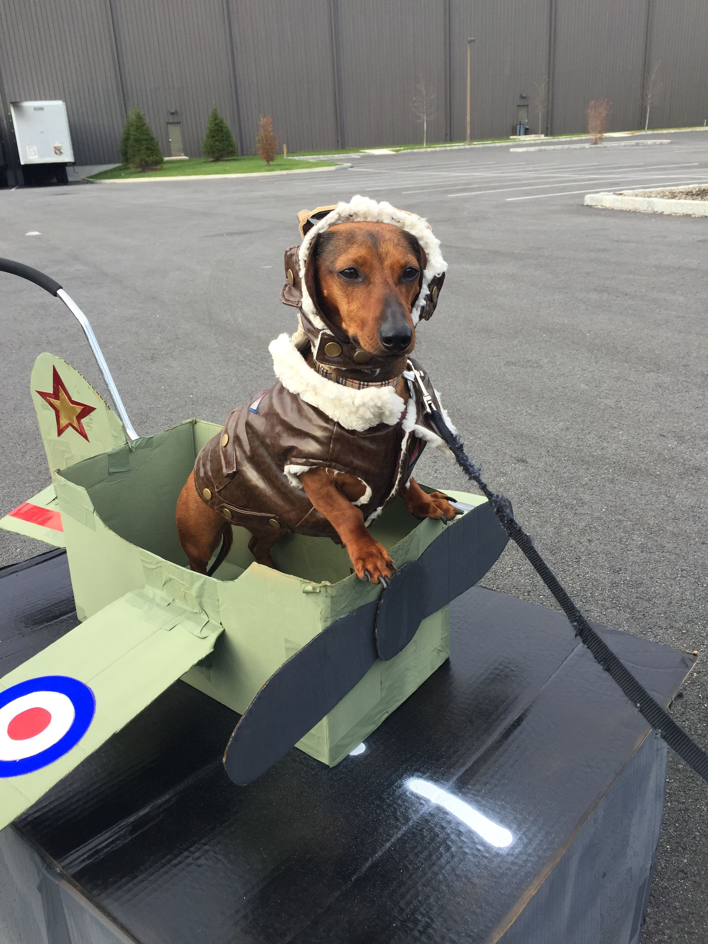 Aviator Dog Costume With Airplane Made Out Of Cardboard Box