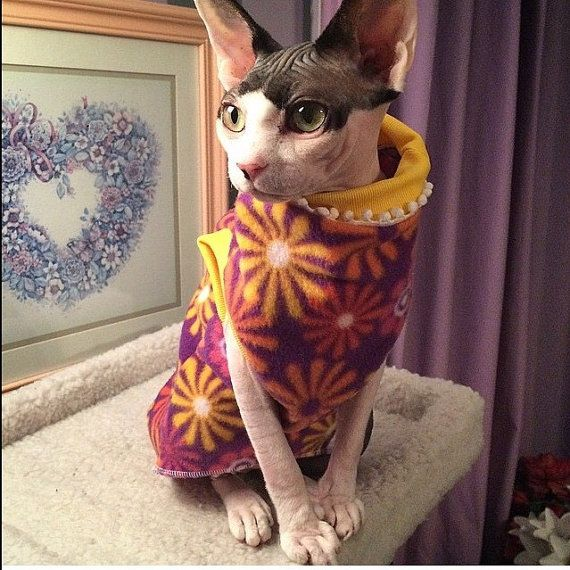Miso the naked kitty showing off her Flower Power in her clothing Sweater Shirt for Sphynx Cat and Kitten
