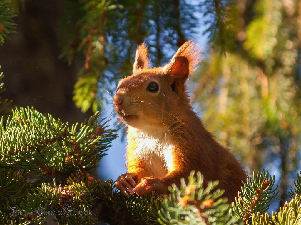 Eichhörnchen im Pragfriedhof