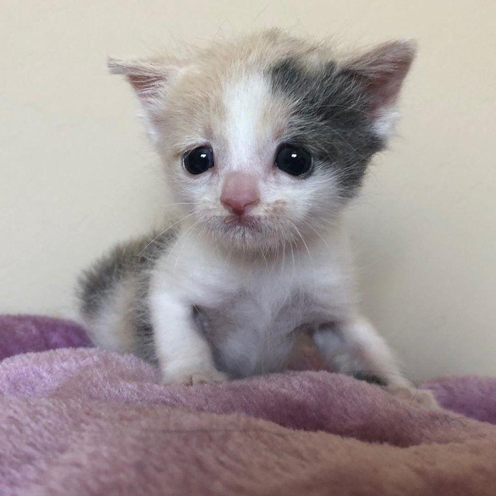 Pin On Itty Bitty Kitties