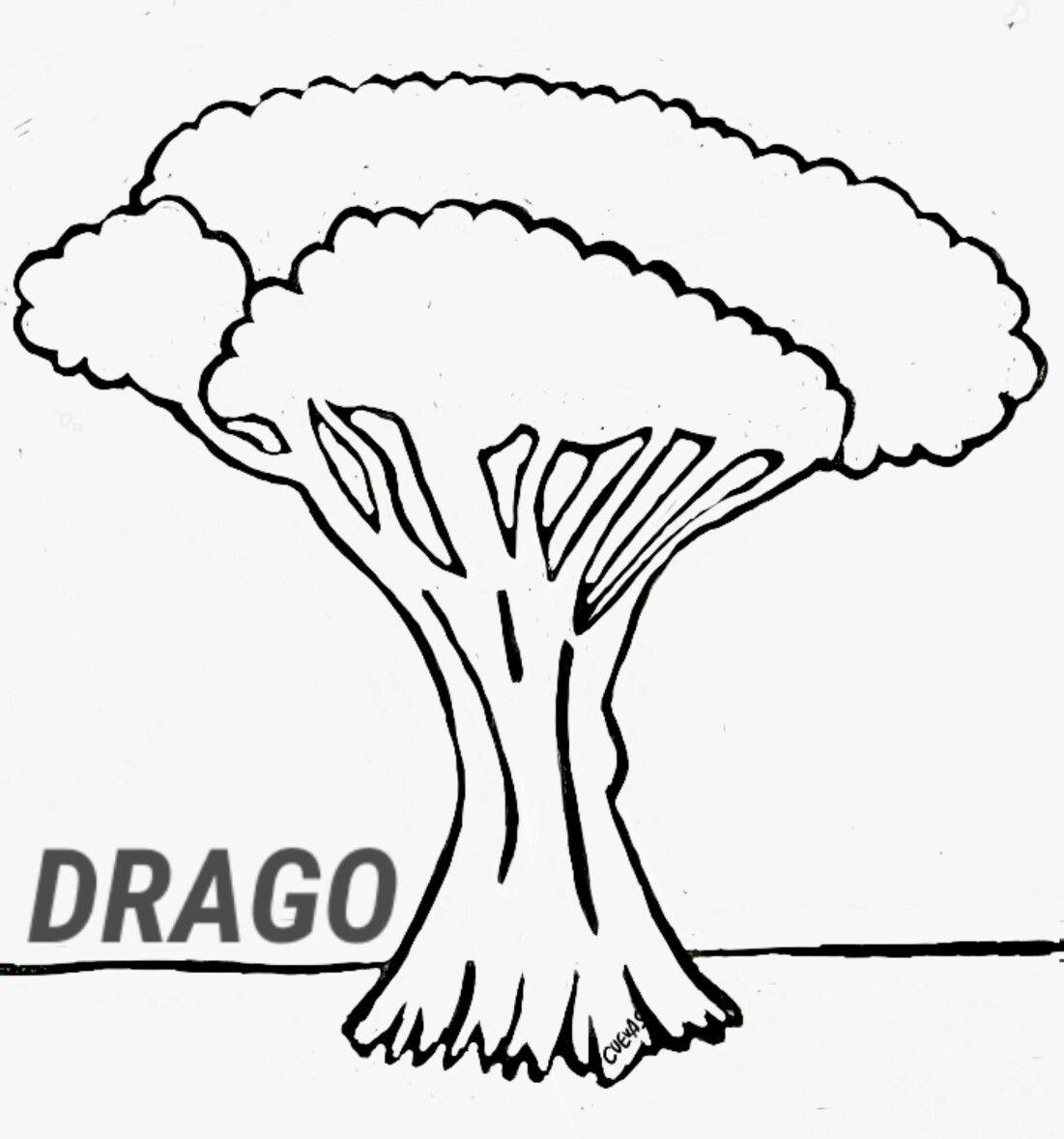 Drago Canarias Tipico Dia De Canarias Carne Mechada Un Dia