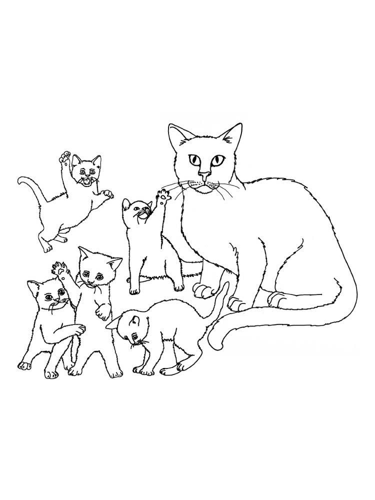 Kitten Family Coloring Pages The Kitten Is A New Born Little Cat This Term Is Used For Cats Under Family Coloring Pages Family Coloring Animal Coloring Pages