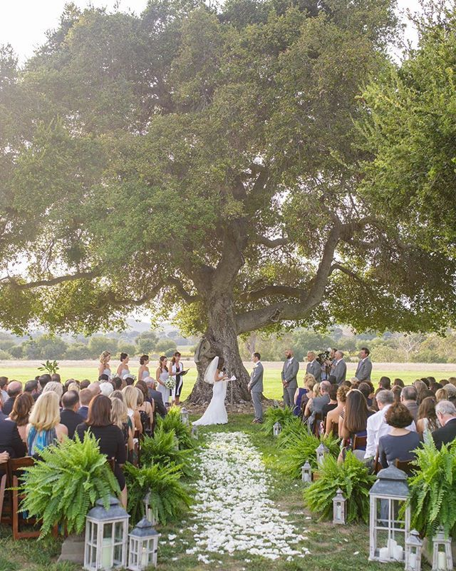 This Enormous Oak Tree At Crossroads Is The Most Beautiful Backdrop For A Wedding Ceremony
