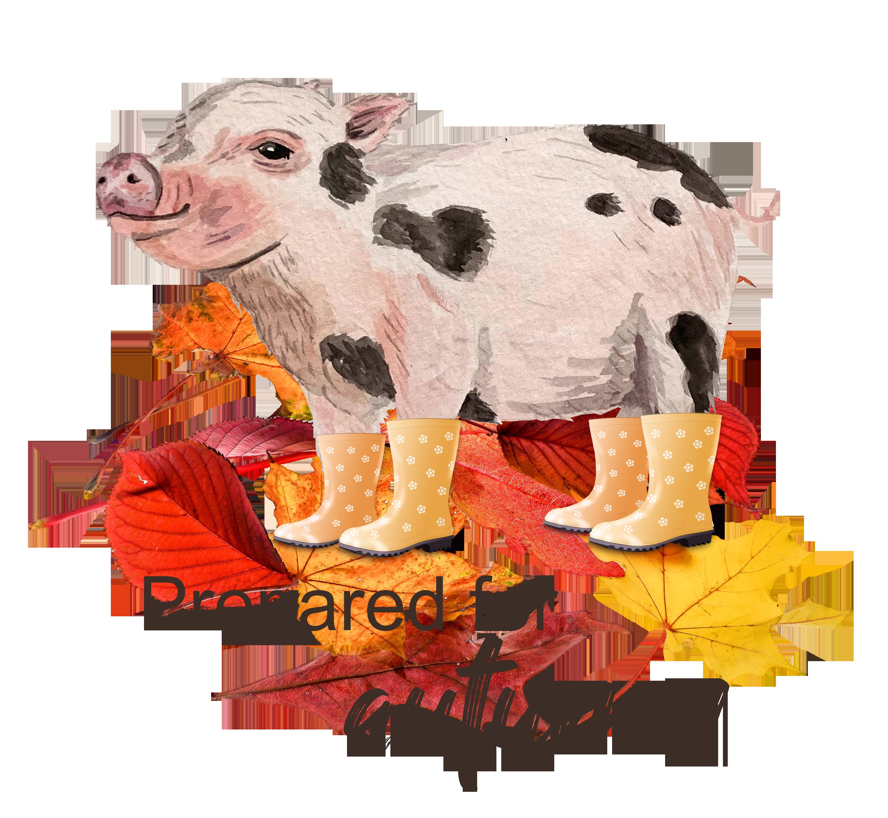 Bist du bereit für den Herbst wie dieses süße Minischwein