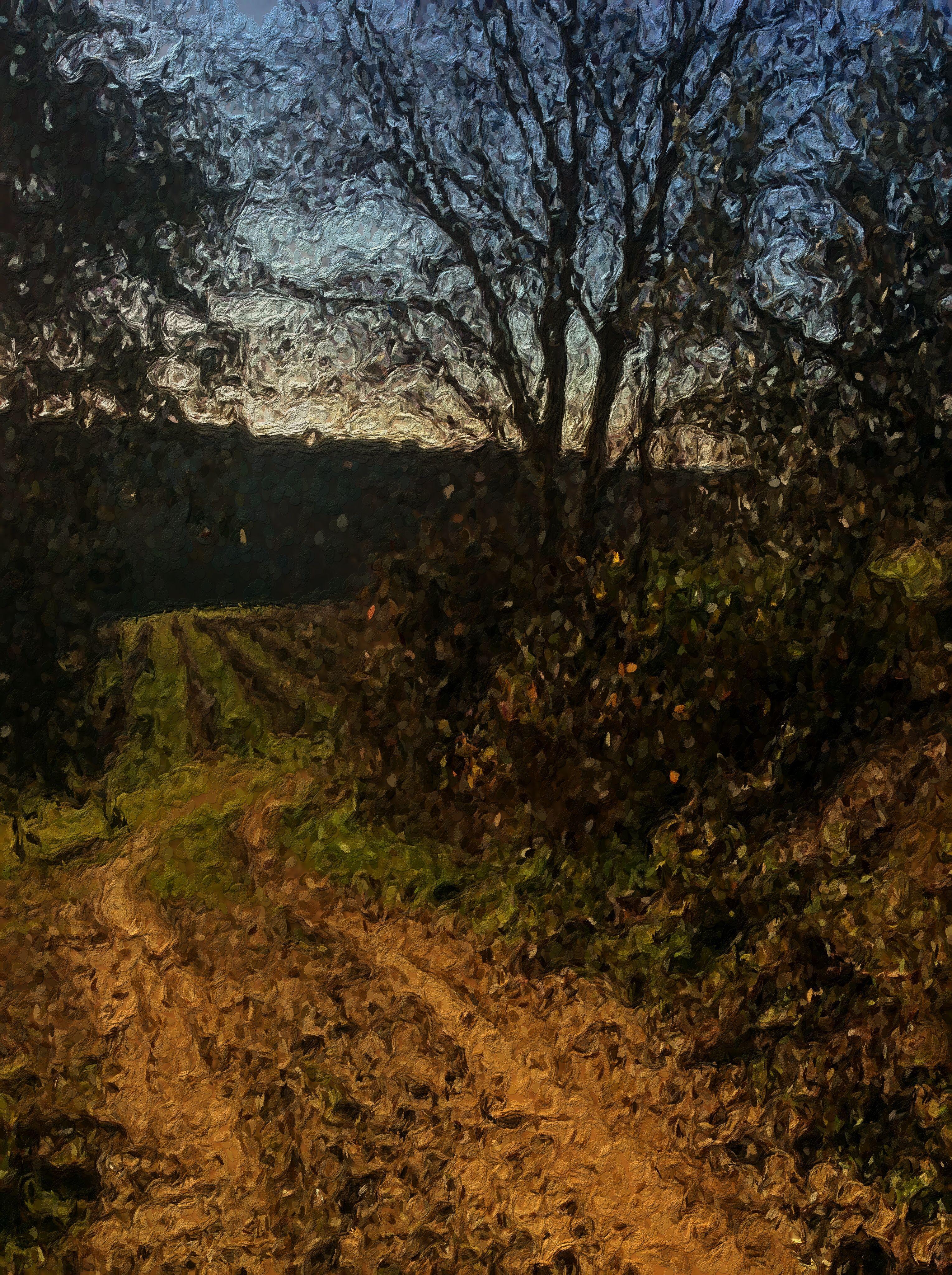 La Strada degli Olivi