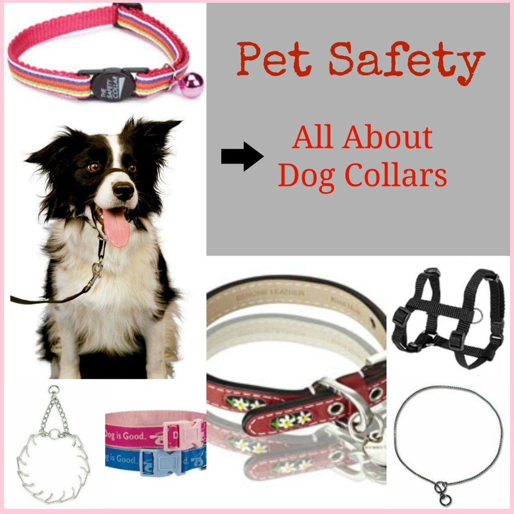 Pet Safety Dog Collars Dogs Dog Safety Pet Collars