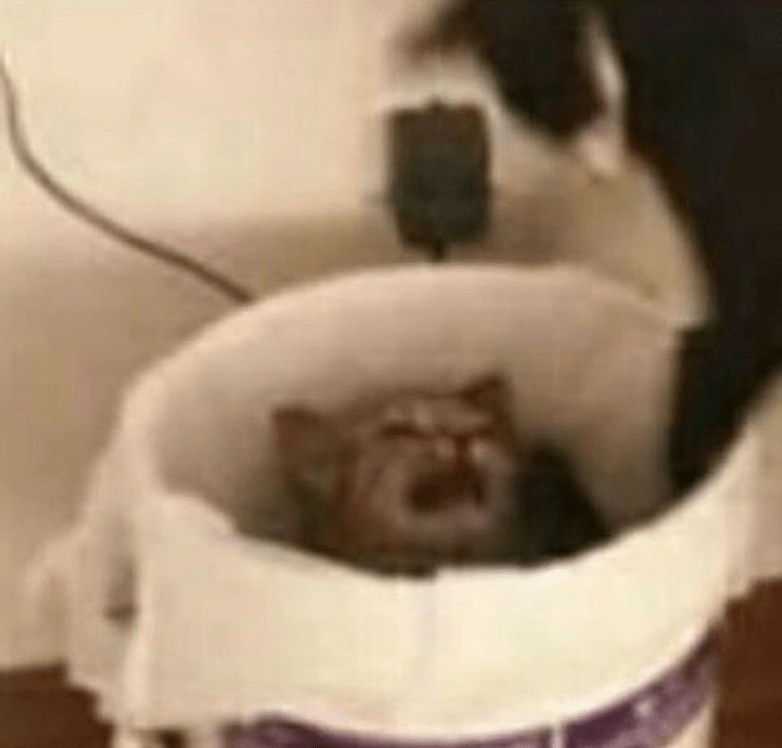 Roundup Of Cursed Cat Images For Those Who Want To Feel Mildly Strange - Memebase - Funny Memes