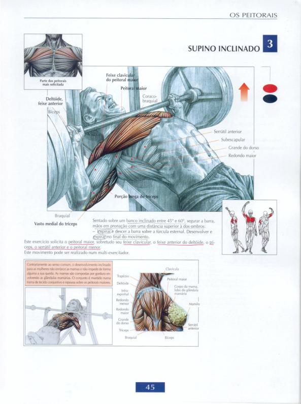Exercícios para peito | Anatomía, Anatomía muscular y Torso masculino