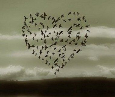 Flock of birds heart