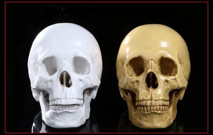 Medical resin skulls human skull model bar decoration taxidermy - halloween club decorations