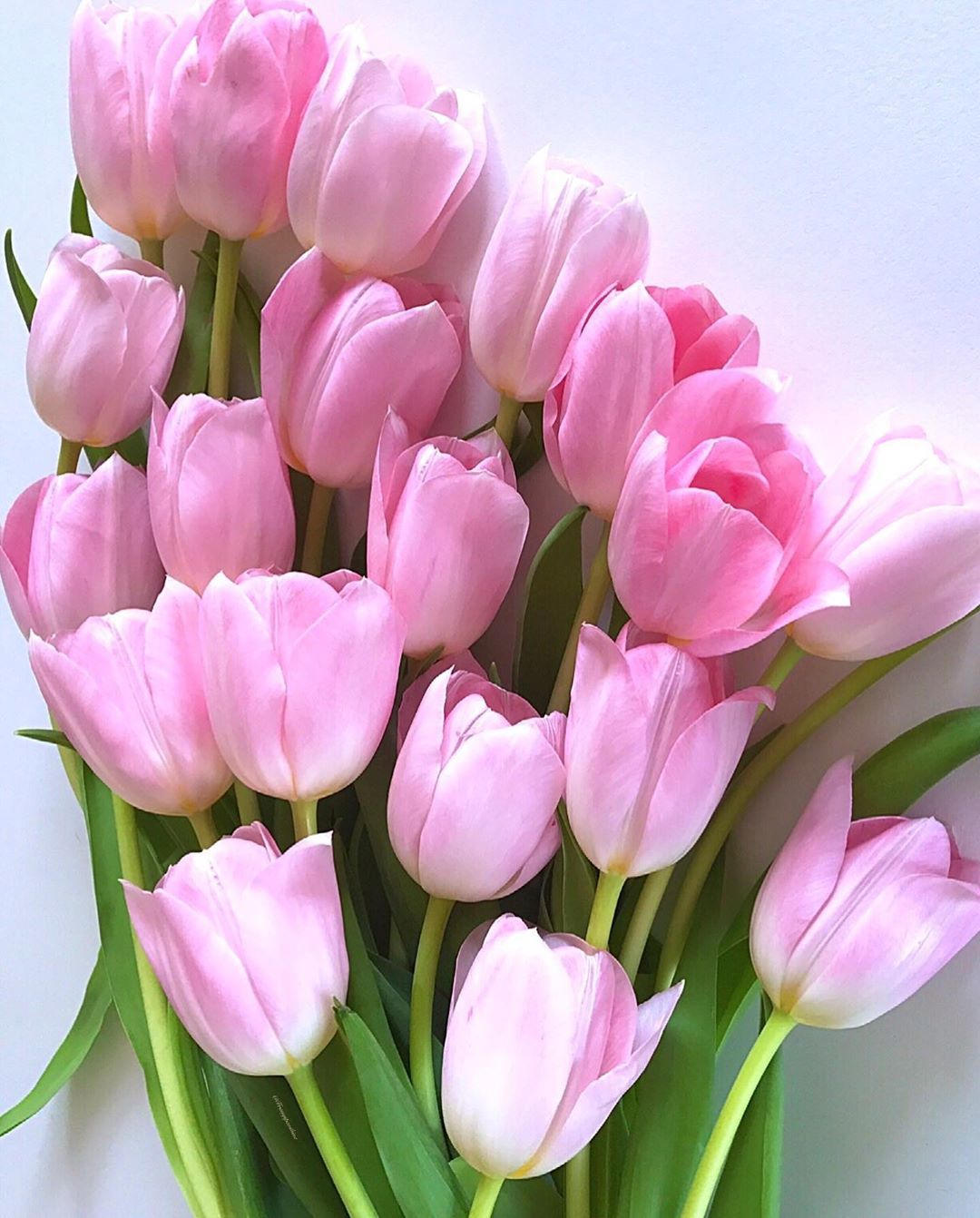 Good Morning I Love Tulips Have A Nice Sunday My Dear Friends Ptk Flowers In 2020 Beautiful Pink Flowers Beautiful Flowers Tulips Flowers