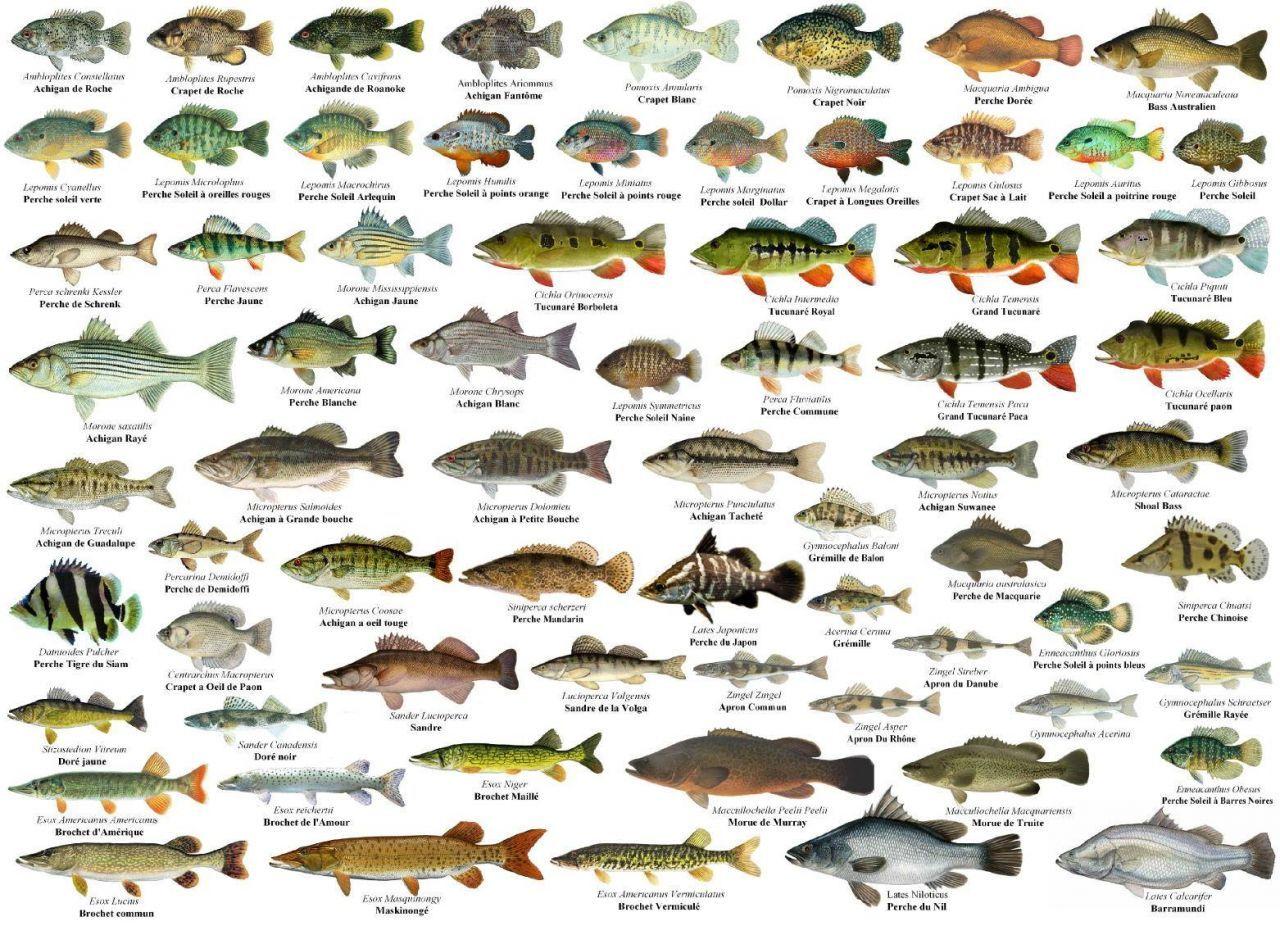 начале виды рыб с названиями и картинками метрополитена интересным