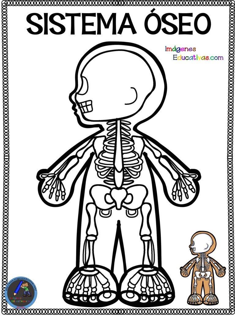 Cuaderno para colorear El Cuerpo Humano (9) | Sistemas del cuerpo humano,  Aparatos del cuerpo humano, Cuerpo humano