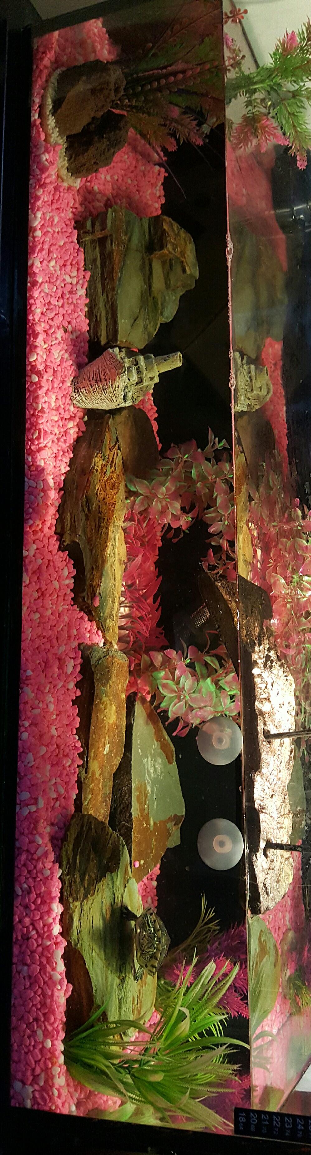 Yellow belly turtle set up terrarium vivariumthoughts pinterest