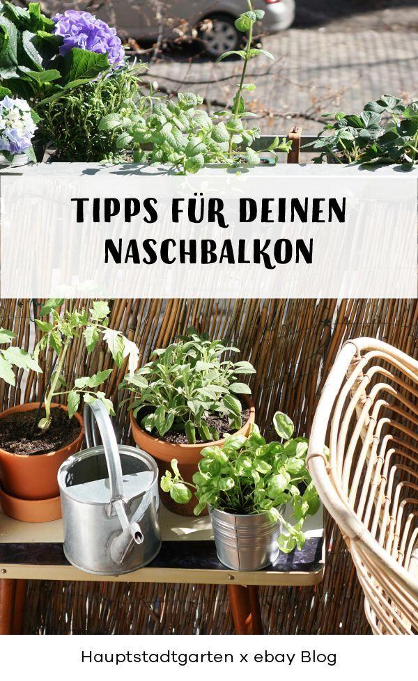 Frühling auf dem Balkon: Tipps für deine grüne Oase