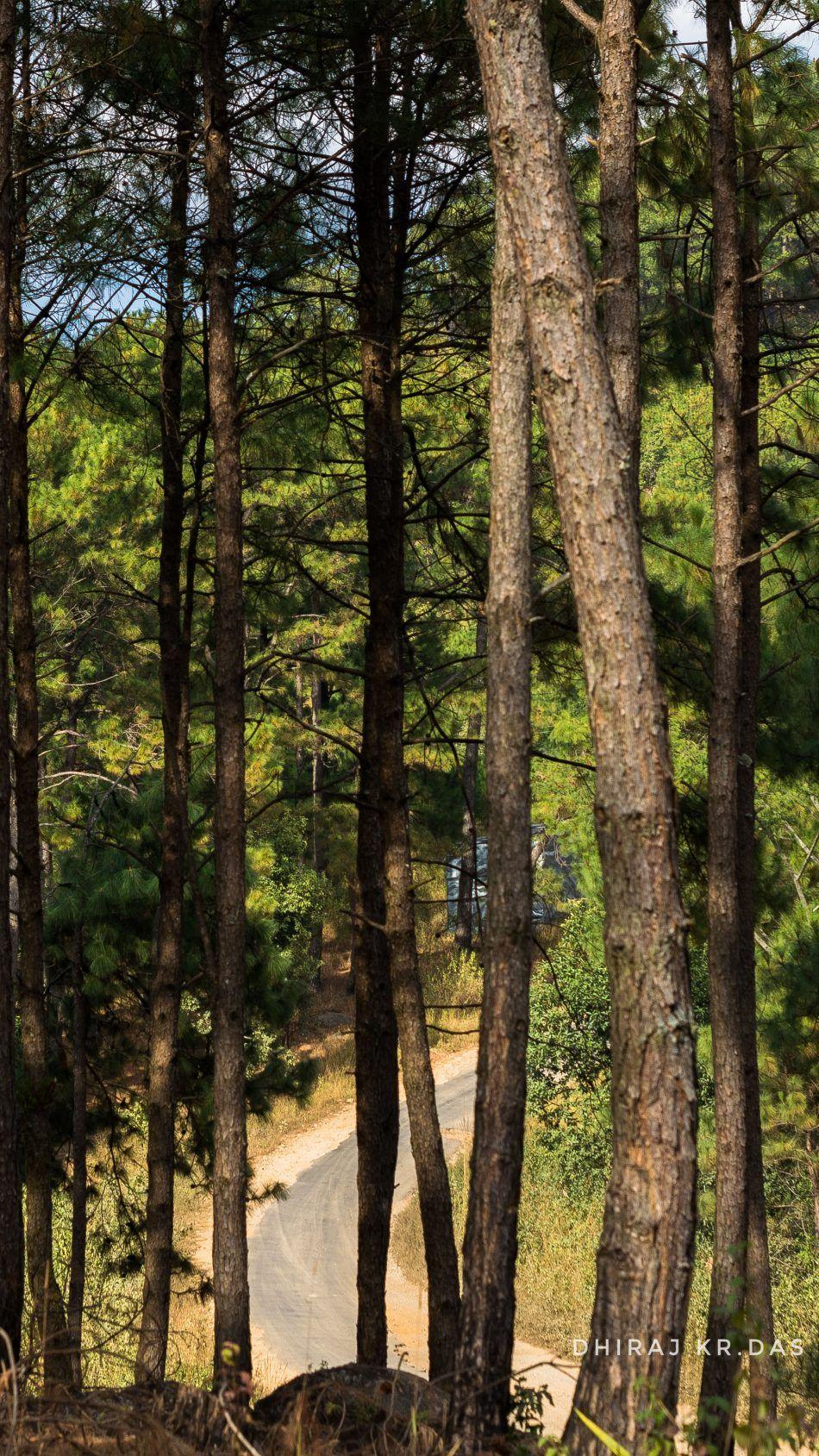 Trees Forest Road Meghalaya 4k Ultra Hd Mobile Wallpaper Forest Road Tree Forest Forest Wallpaper