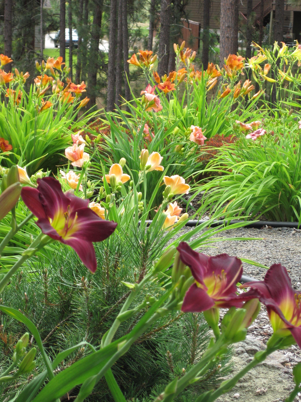 Landscaping Inspiration/Garden