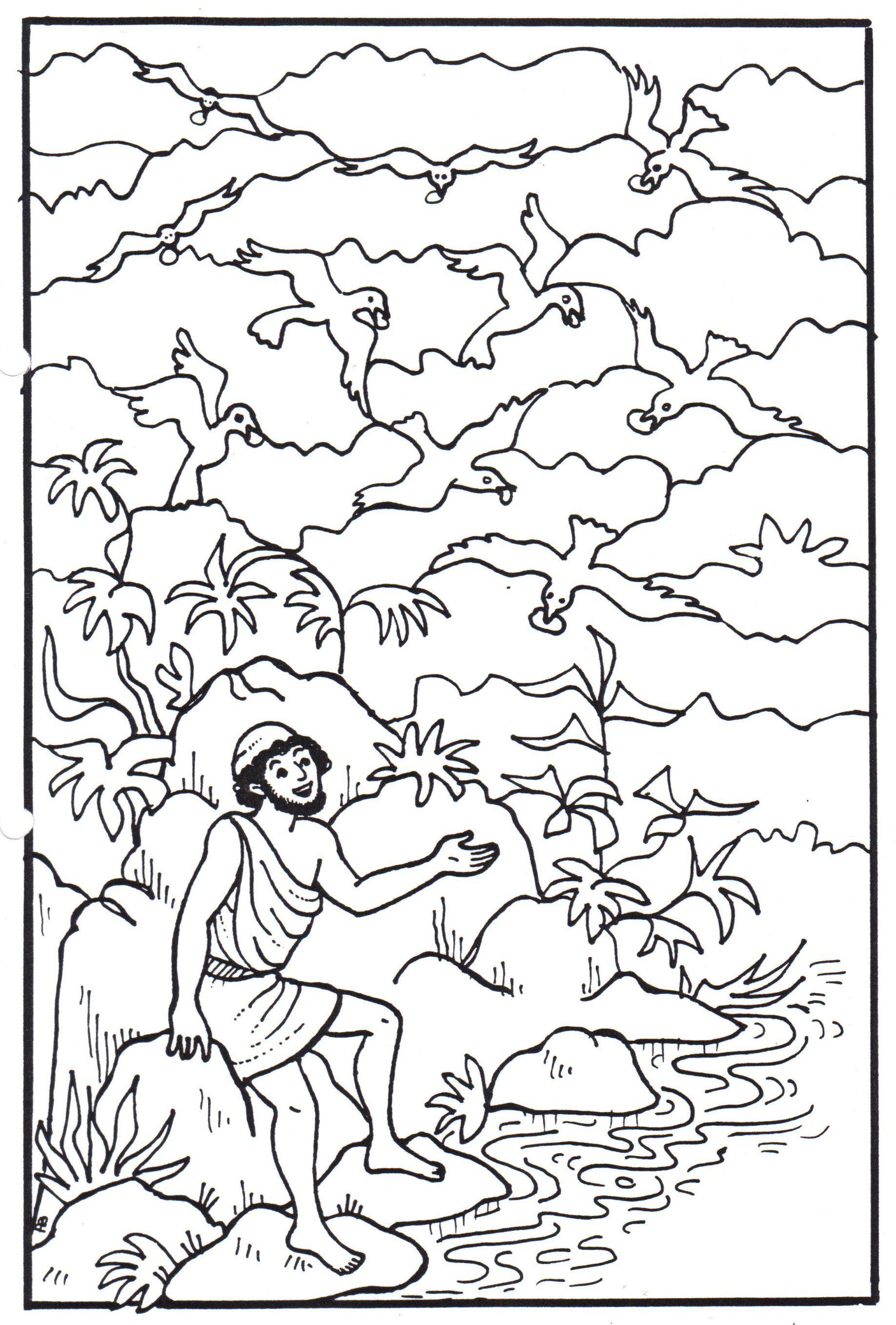 Elijah and the ravens | God: BCM - Elijah | Pinterest | Ravens ...