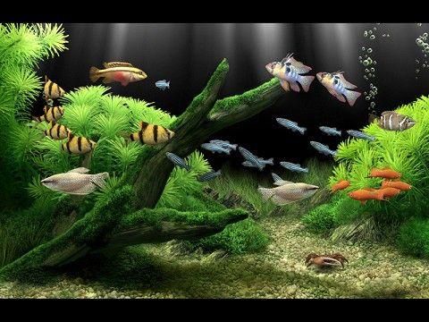 Wallpapers Hd Aquarium Screensaver Aquarium Tropical Fish Aquarium