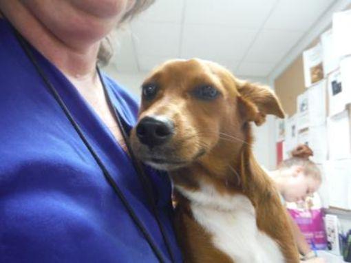 Fort Worth, TX Terrier (Unknown Type, Small). Meet Flint