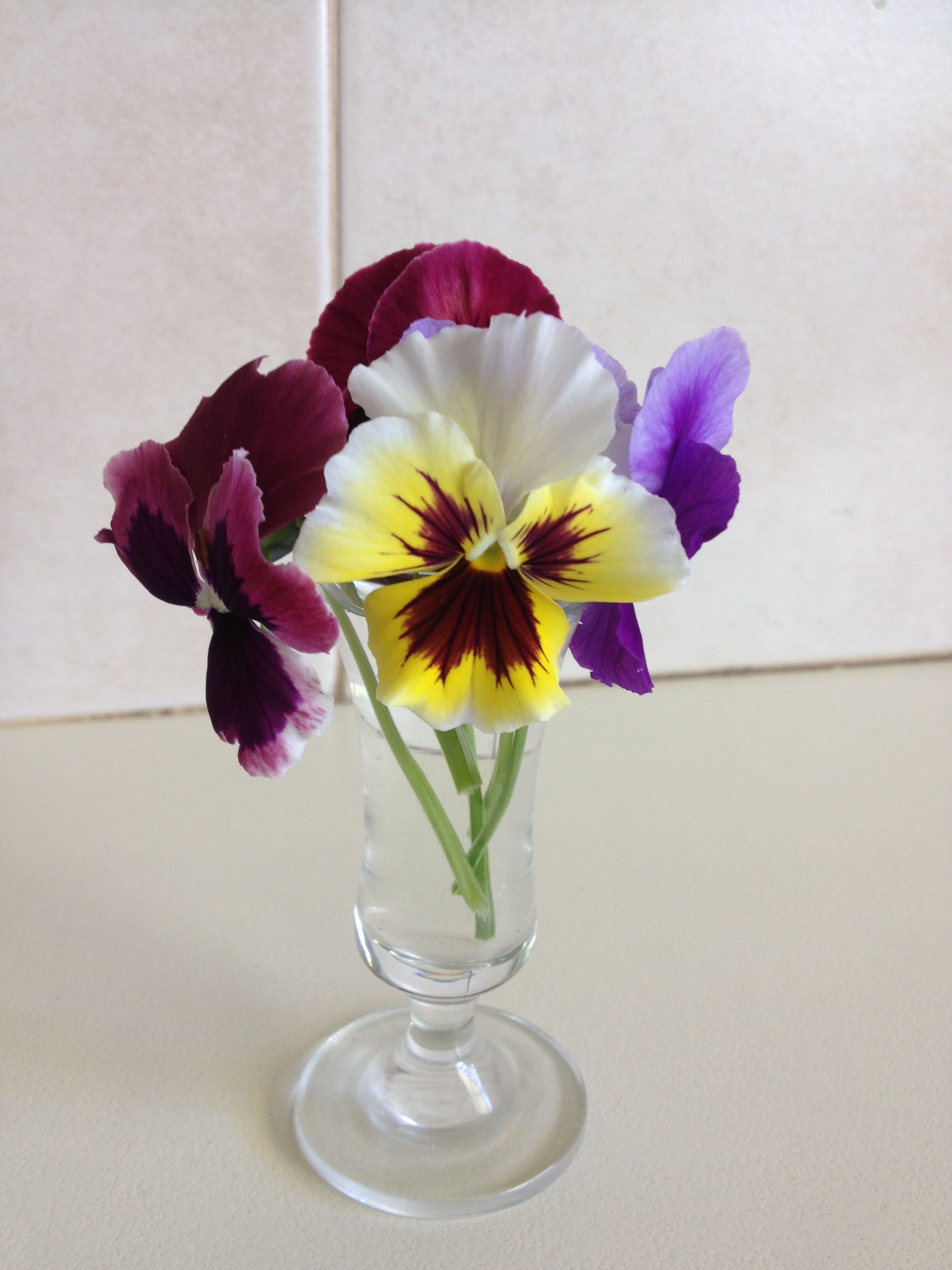 Pansies In A Vase Amor Perfeito
