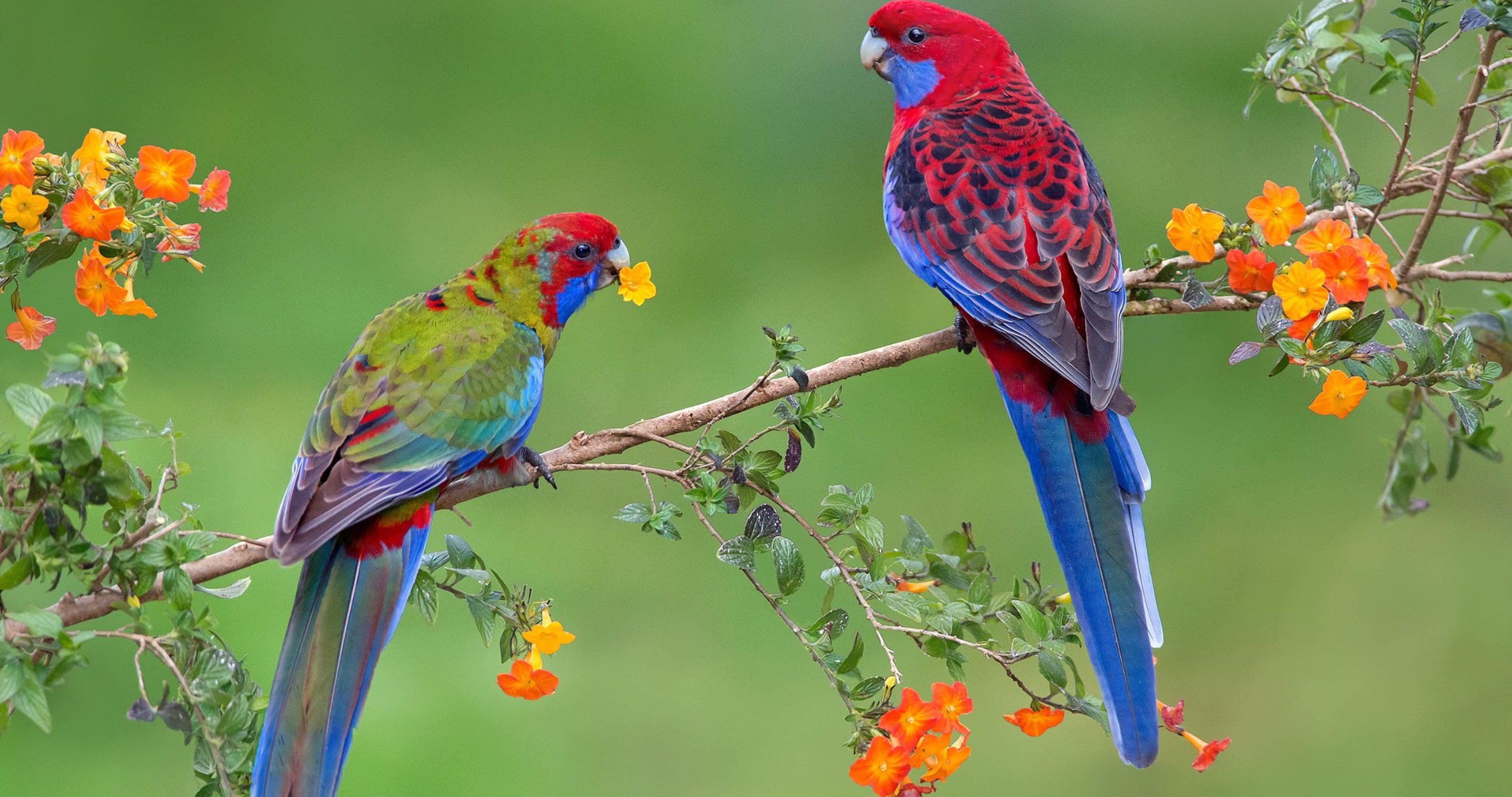 A Couple Parrots 4k Ultra Hd Wallpaper Birds Beautiful Birds Parrot