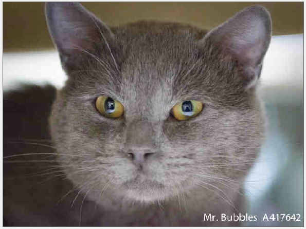Mr. Bubbles in Sacramento, CA is looking for his forever