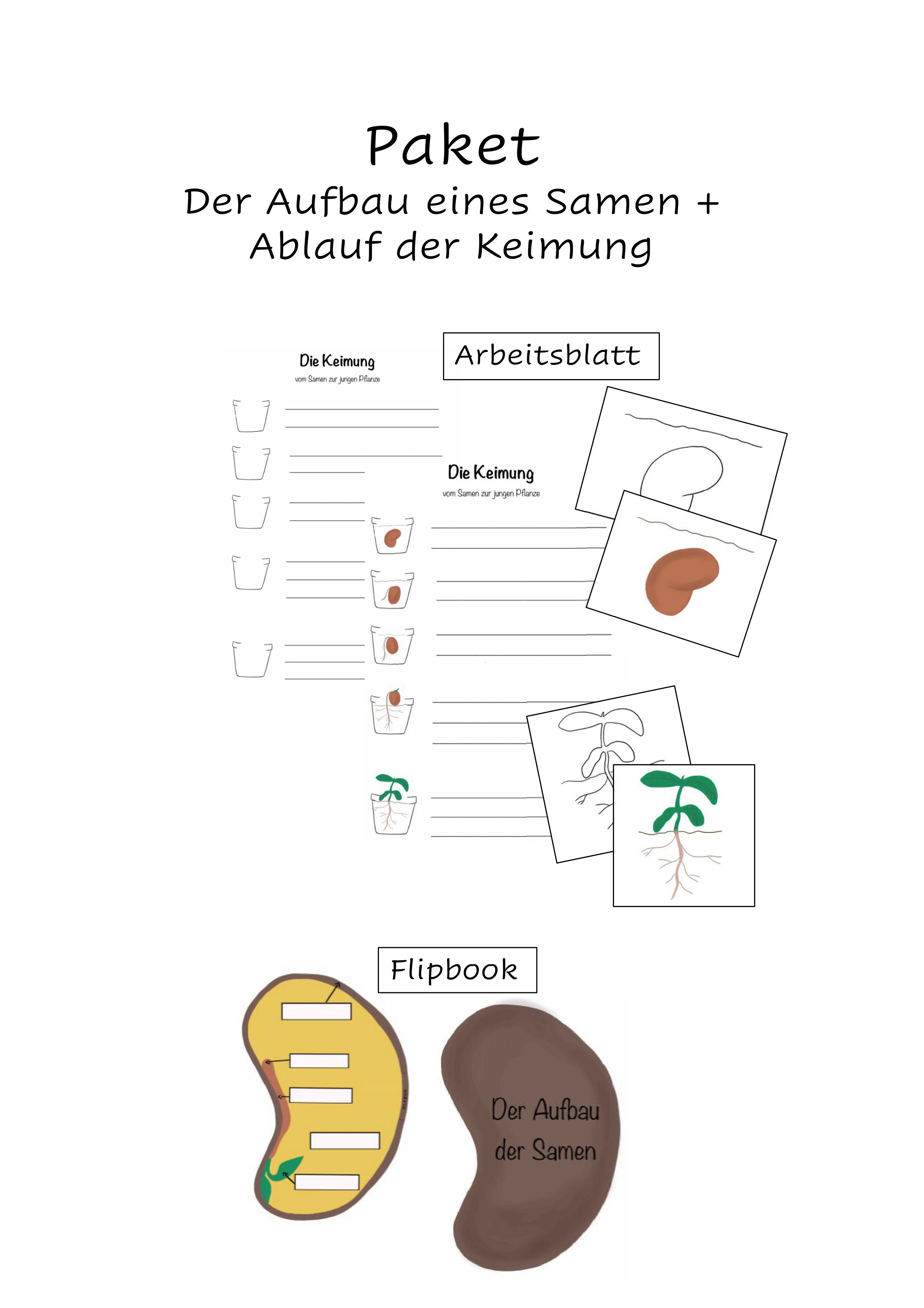 Flipbook Aufbau eines Samens + AB Schritte der Keimung ...