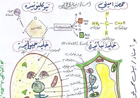 رسومات منهج احياء اولى ثانوى ترم اول 2019 للاستاذ نبيل عويس Biology Curriculum Best Graphics Graphic
