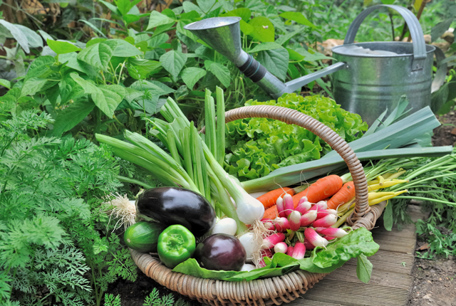 10 Vegetable Gardening Mistakes You Might Be Making | Gardens